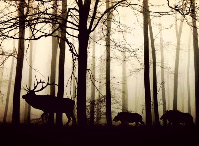 Zvířata kvůli nám umírají