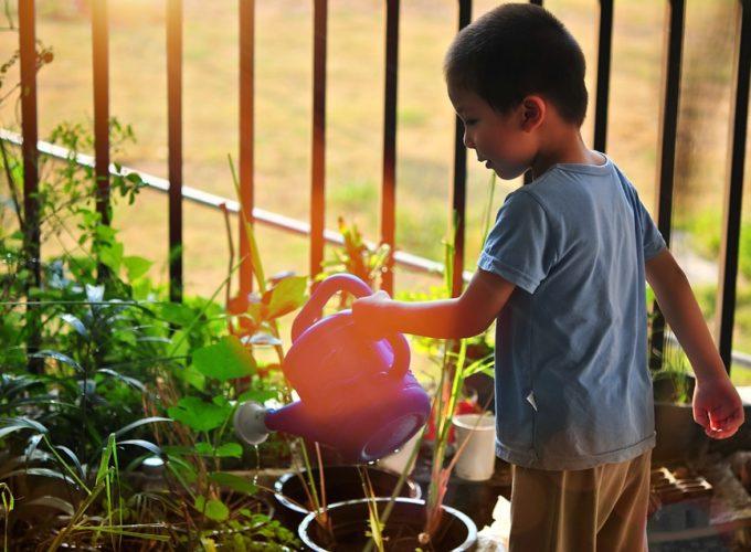 Výsadba rostlin