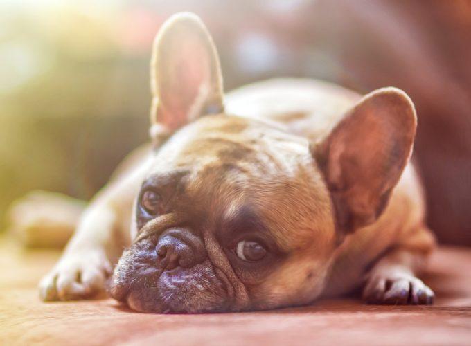 Nemocný pes – co vše mu poskytnout