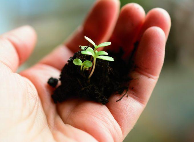 Tipy a rady pro pěstitele pokojových rostlin