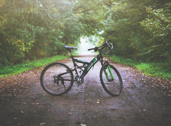 Chcete si koupit horské kolo? Setkat se můžete s hned několika druhy