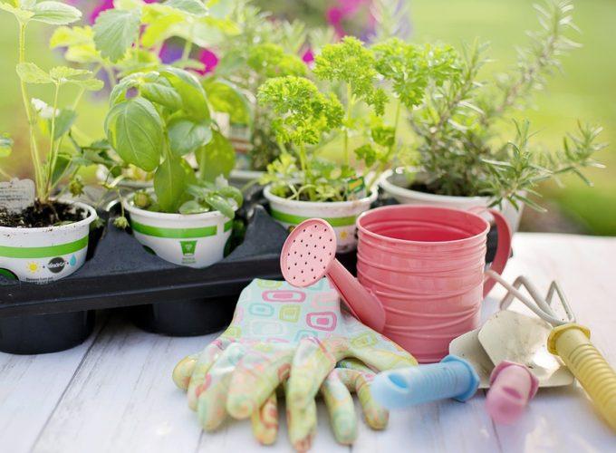 Chyby při pěstování bylinek