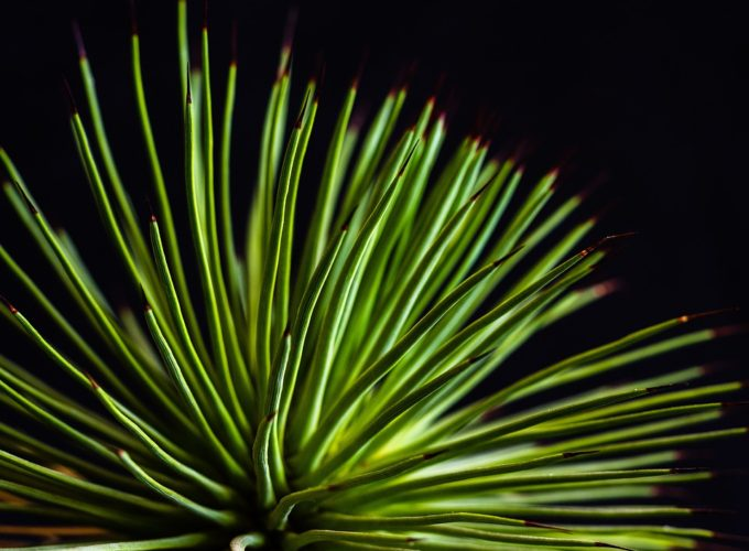 Pokojové rostliny jako efektivní čističky vzduchu