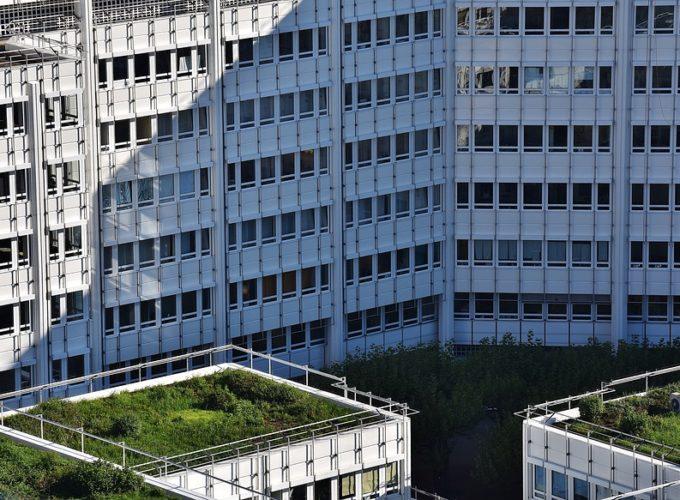 Co jsou to zelené střechy a jak vysokou dotaci na ně lze získat?